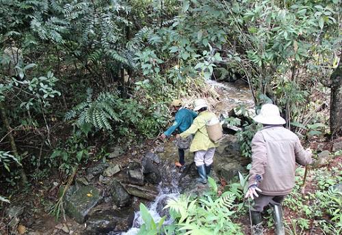Mua nấm lim xanh rừng ở đâu là Tốt nhất? Nấm lim xanh tự nhiên Quảng Nam