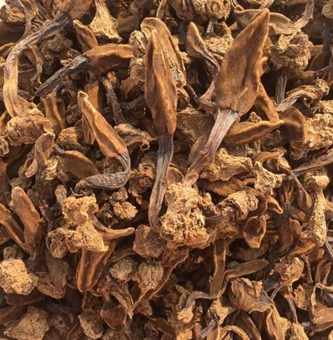 Hình ảnh nấm ngọc cẩu khô