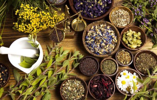 Phương pháp điều trị ung thư từ thảo dược cỏ lưỡi rắn, nấm lim xanh