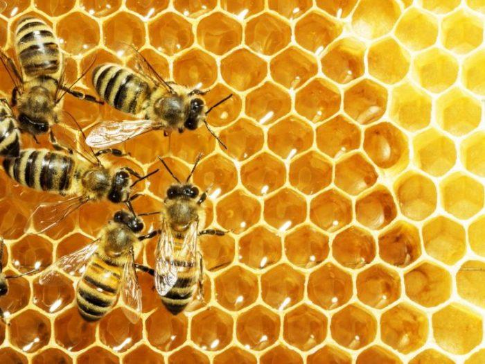 Mật ong được chính các con ong tạo ra