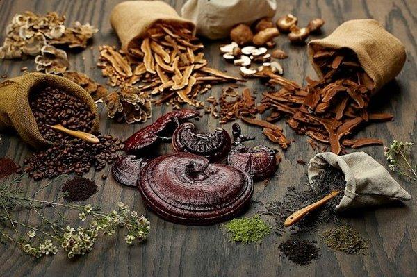 Cách dùng nấm linh chi và cách sử dụng nấm linh chi an toàn và tốt cho sức khỏe.