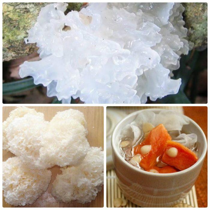Nấm tuyết là loại nấm quý, có giá trị dinh dưỡng cao