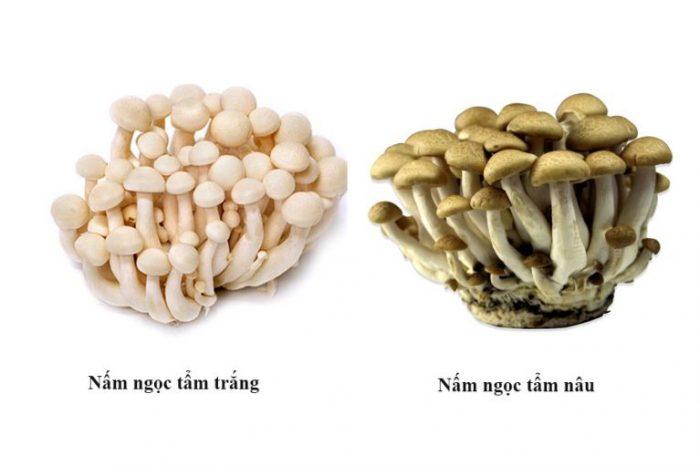 Nấm ngọc tẩm có 2 loại nâu và trắng