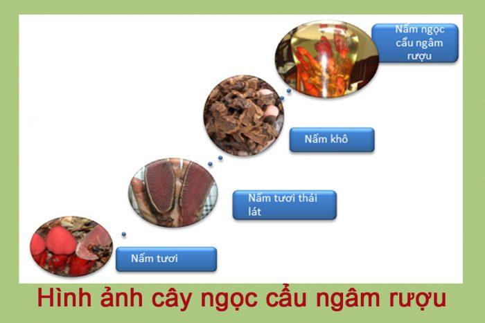 Cây ngọc cẩu tươi hay khô đều có thể dùng để ngâm rượu tốt cho sinh lý nam giới.