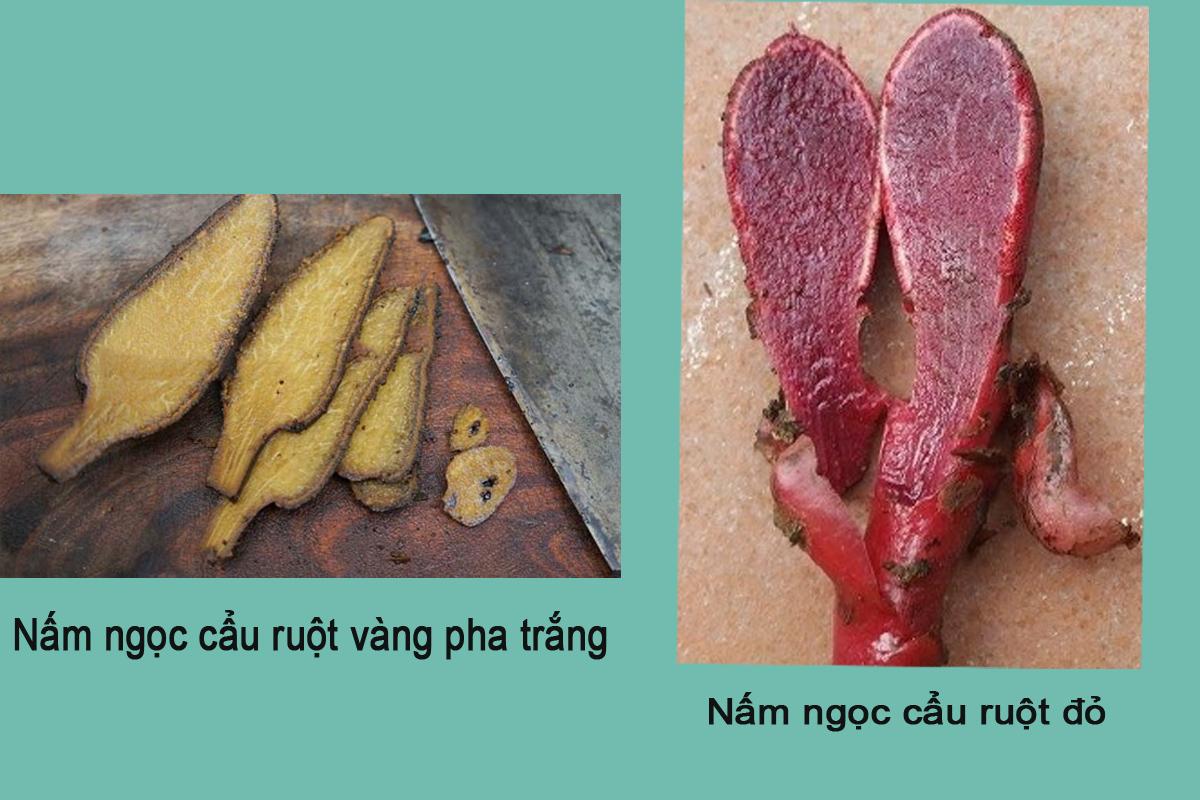 Màu sắc của ruột cây ngọc cẩu cũng giúp phân biệt rõ ràng.