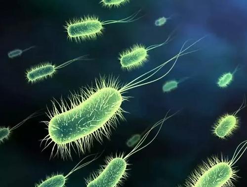 Vi khuẩn Hp nguyên nhân gây ung thư dạ dày nhiều nhất hiện nay