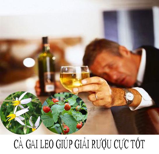 Say rượu có thể dùng cà gai dây giải độc, tỉnh rượu nhanh chóng.