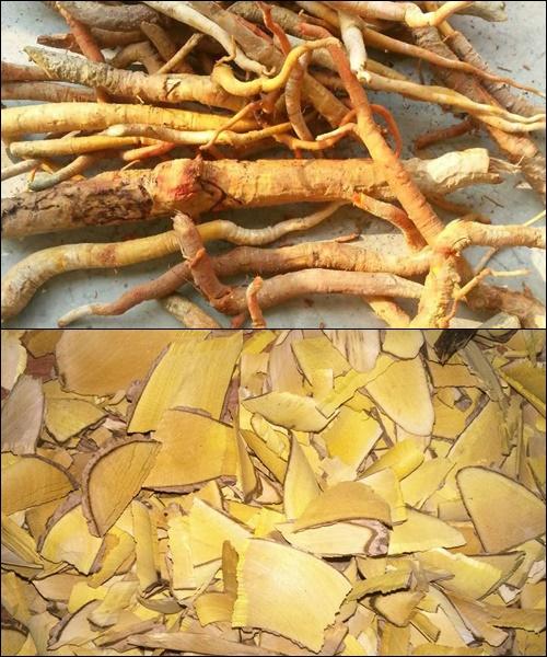 Rễ cây mật nhân trước khi ngâm thì đem thái nhỉ phơi nắng cho khô