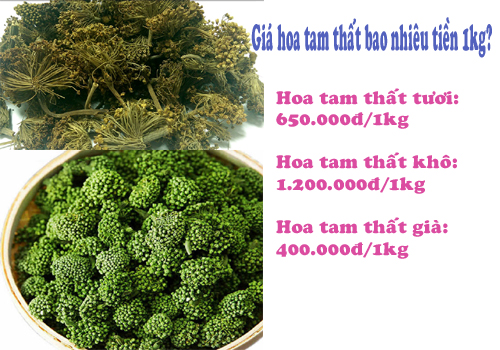 Giá hoa tam thất bao nhiêu tiền 1kg phụ thuộc vào cách chế biến