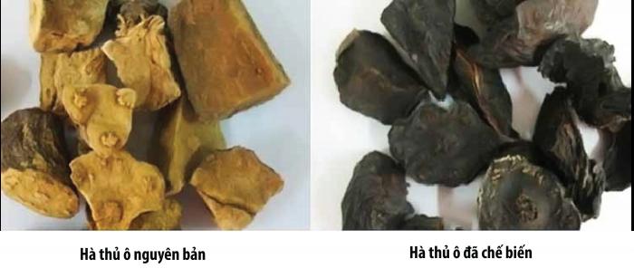 Hà thủ ô chế biến là phương pháp Y học cổ truyền Trung Quốc. Nó được xử lý trong nước đậu đen và rượu vang. Thông thường, những công thức chế biến này loại bỏ một số độc tố và gluten.