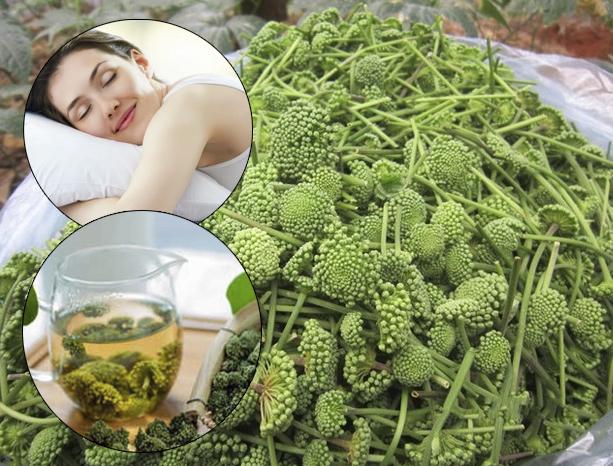 Hoa tam thất có tác dụng điều trị mất ngủ, đem lại giấc ngủ ngon cho người bệnh.