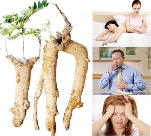 Mật nhân có tác dụng chữa yếu sinh lý, ăn không tiêu, giảm căng thẳng.