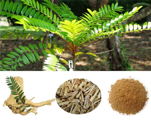 Mật nhân là loại cây thuốc quý có giá trị tốt với sức khỏe con người.