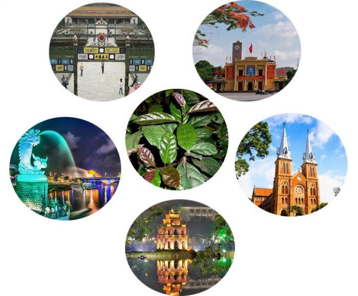 Nơi mua cây xạ đen tại các thành phố lớn như Hà Nội, Hải Phòng, Tp.HCM, Đà Nẵng, Huế...