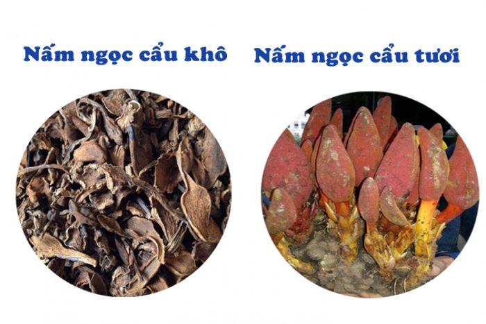 Phân biệt nấm ngọc cẩu khô và tươi