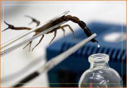 Nọc độc của bọ cạp xanh ở Cuba được đồn đoán có khả năng chữa ung thư