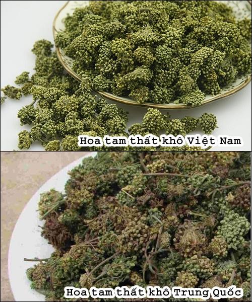 Hình ảnh hoa tam thất khô Việt Nam và hoa tam thất khô Trung Quốc