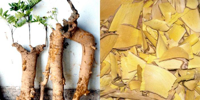 Hình ảnh rễ cây mật nhân (bên trái), rễ cây mật nhân sau khi được thái lát (phải)