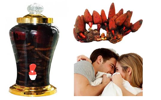 Nấm ngọc cẩu ngâm rượu giúp bổ thận, tráng dương, tăng cường sinh lực đặc biệt cho nam giới.