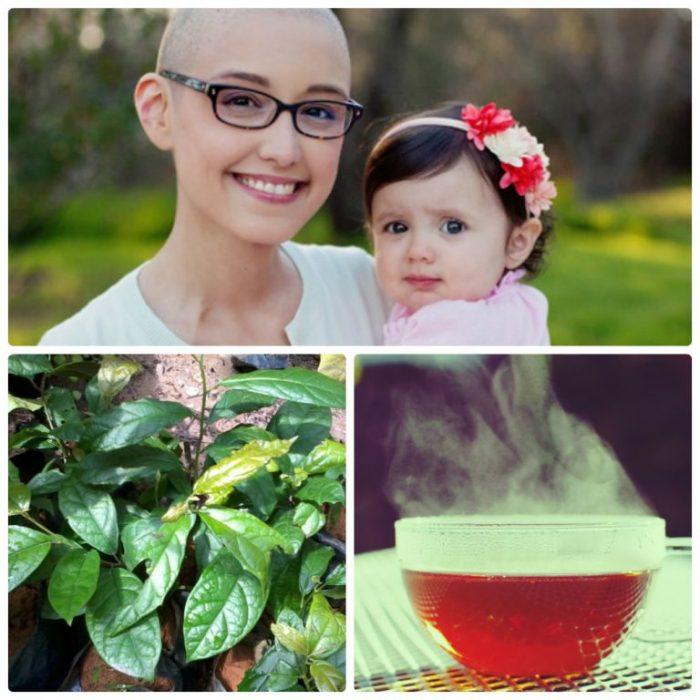Cây xạ đen hỗ trợ điều trị ung thư hiệu quả