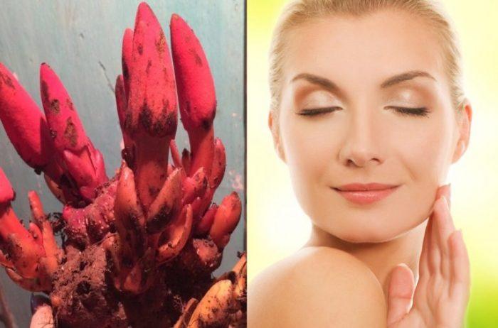 Nấm ngọc cẩu có tác dụng duy trì thanh xuân với phụ nữ