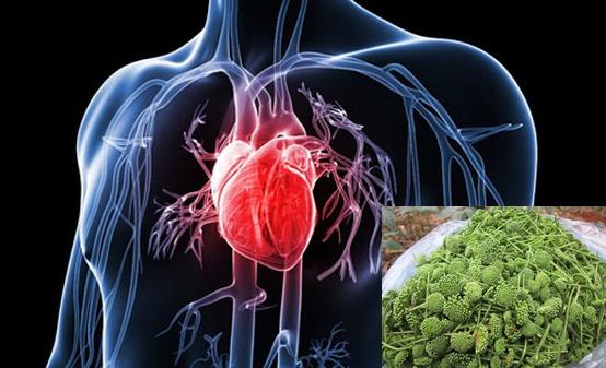 Hình ảnh hoa tam thất: Hoa tam thất có tác dụng hỗ trợ điều trị các bệnh lý tim mạch