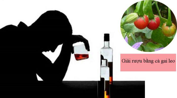 Uống nước hoặc ngậm rễ cà gai dây có tác dụng giải rượu.