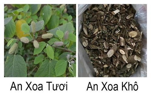 Khi mua cây an xoa, người dùng cần chọn lựa lỹ khi mua cây an xoa khô được băm nhỏ