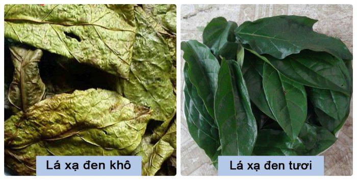 Hình ảnh phân biệt cây thuốc xạ đen tươi, khô.