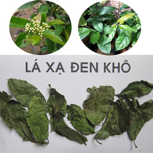 Sử dụng đúng cách cây xạ đen tươi khô sẽ giúp phát huy hết công dụng chữa bệnh của cây thuốc.