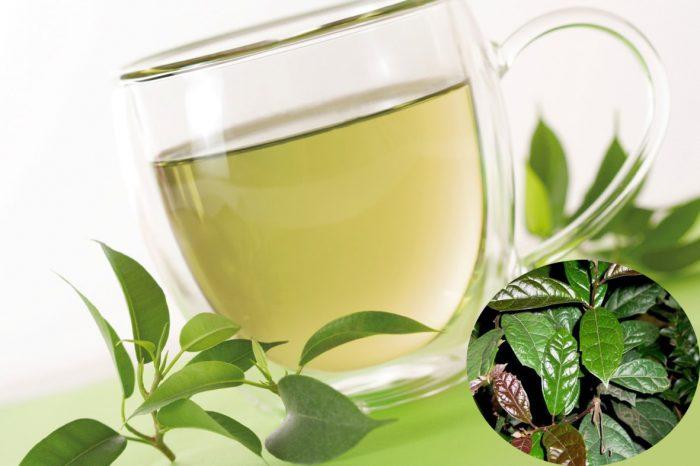 Cách sử dụng lá xạ đen pha trà hoặc sắc được nhiều người yêu thích.