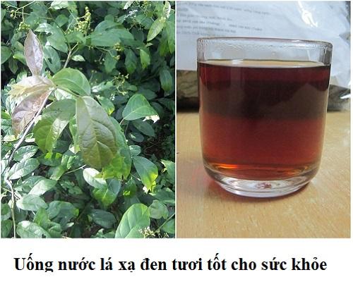 Uống nước sắc từ lá xạ đen tươi hàng ngày tốt cho sức khỏe con người