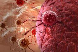 Không nên liều lĩnh điều trị ung thư bằng mật cóc để tránh gây nguy hiểm cho tính mạng.