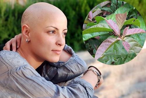 Người bị ung thư nên dùng nước xạ đen giúp hỗ trợ điều trị bệnh.