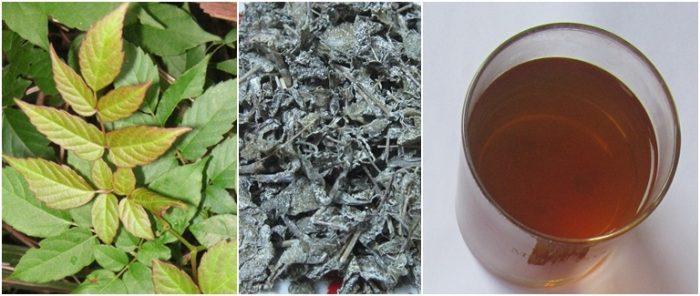 Có thể sử dụng chè dây khô để hãm như nước trà uống thay nước hàng ngày.