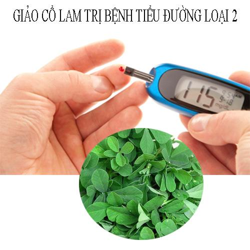 Cây thuốc giảo cổ lam giúp trị bệnh tiểu đường loại 2 hiệu quả.