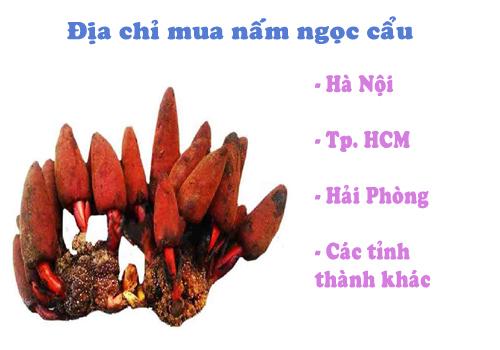 Chọn địa chỉ mua nấm ngọc cẩu uy tín, chính hãng, có kiểm định chất lượng tại các thành phố lớn Hà Nội, TP.HCM, Hải Phòng...