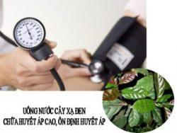 Uống nước cây xạ đen giúp ổn định huyết áp, chữa huyết áp cao.