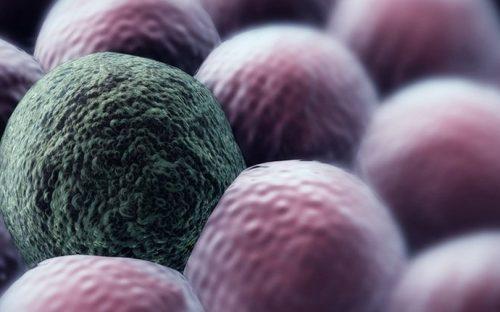 Phương pháp điều trị ung thư mới bằng cách để tế bào sống