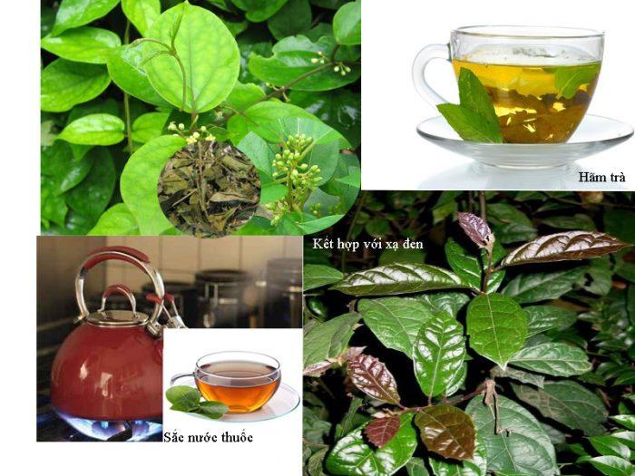 Cách dùng dây thìa canh tốt cho sức khỏe là dùng hãm trà uống hàng ngày, sắc nước thuốc...