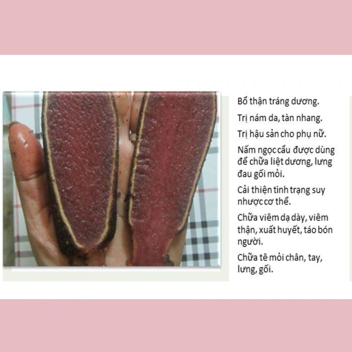Tác dụng chính của nấm ngọc cẩu