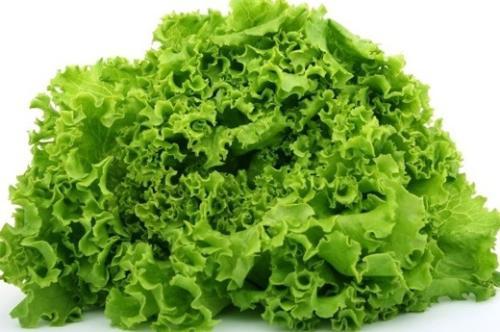 Thường xuyên ăn rau diếp giúp phòng ngừa ung thư hiệu quả