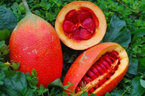 Gấc là thực phẩm chứa nhiều hoạt chất chống ung thư