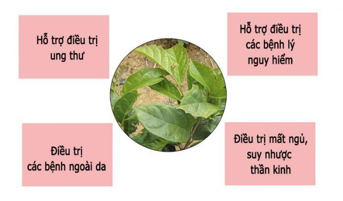 Một số tác dụng chính của trà xạ đen.