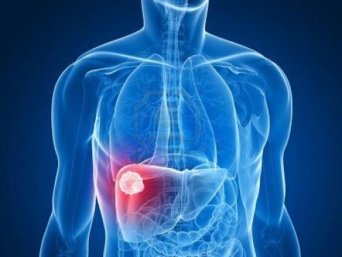 Vị trí của gan nằm ở phần ổ bụng trên