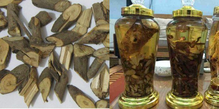 Người ta thường sử dụng thân cây xạ đen để ngâm rượu