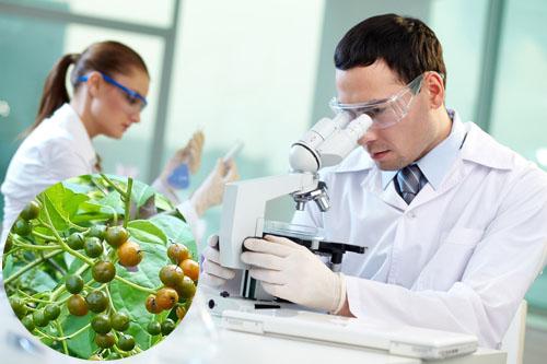 Khoa học đã có những nghiên cứu chứng minh công dụng chữa bệnh từ xạ đen.