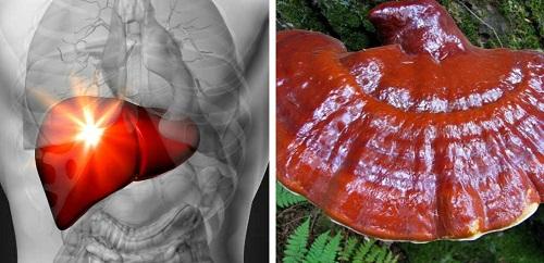 Bài thuốc Nam trị bệnh ung thư gan từ nấm linh xanh