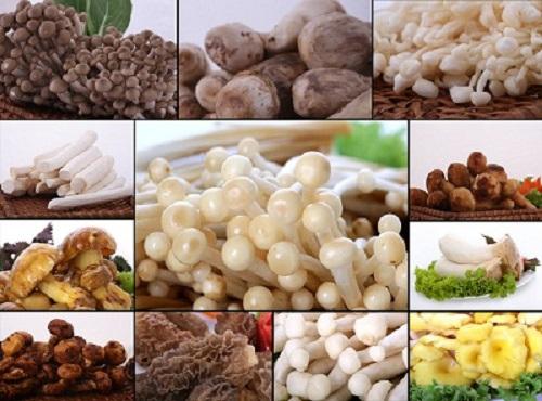 Dinh dưỡng cho người ung thư dạ dày