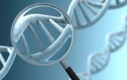 Một số loại Gen di truyền bởi cha mẹ, làm tăng nguy cơ mắc ung thư ở con cái